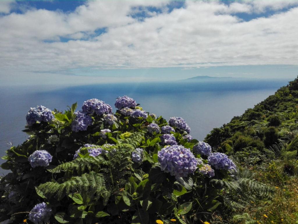 hortensje, hortensja, hydrangeas, São Jorge, Sao Jorge
