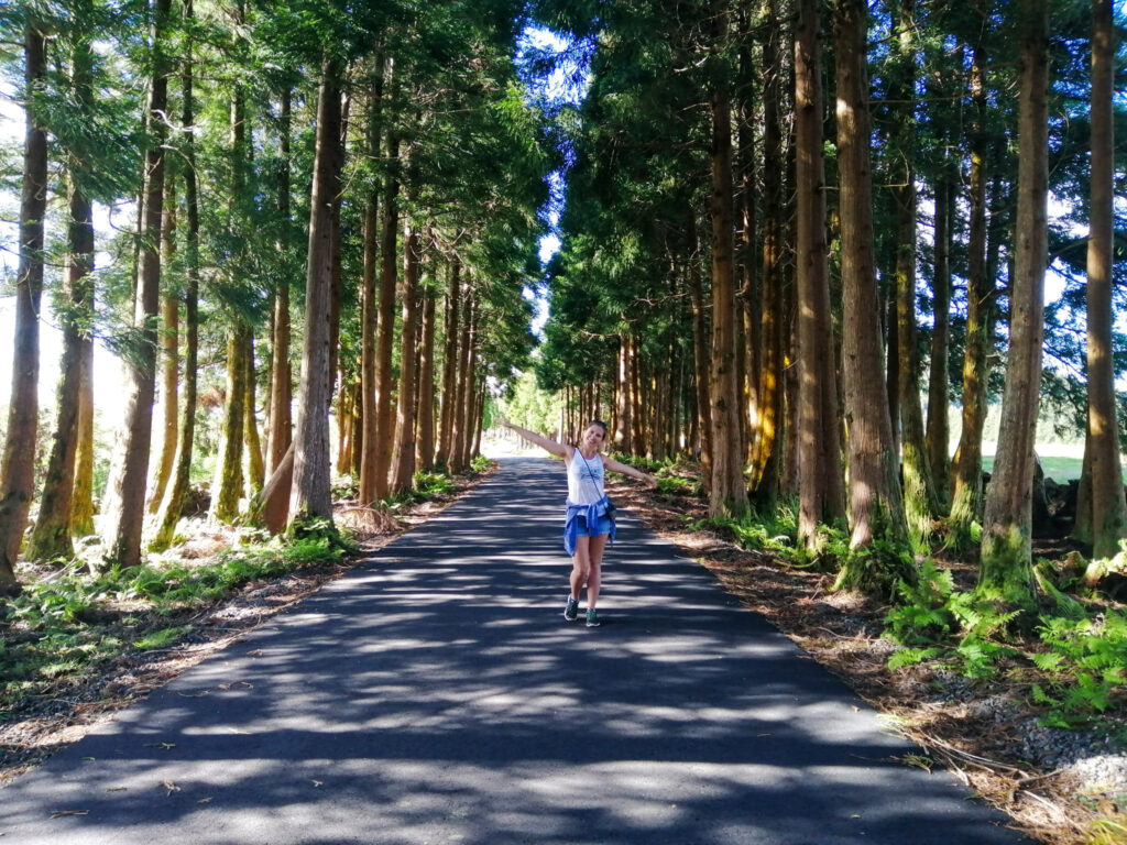 Azory, Azores, Terceira, trail, szlak, trilho, droga, caminho, estrada, Milena, las, drzewa