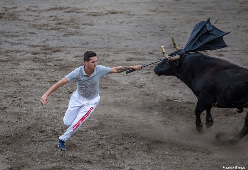 capinha, capinhas, bull, byk, byki, touro, touros, tourada, tourada, festival de capinhas, festiwal, festiwal capinhas, festival, arena, Joao, João, Joao Ramos, João Ramos,