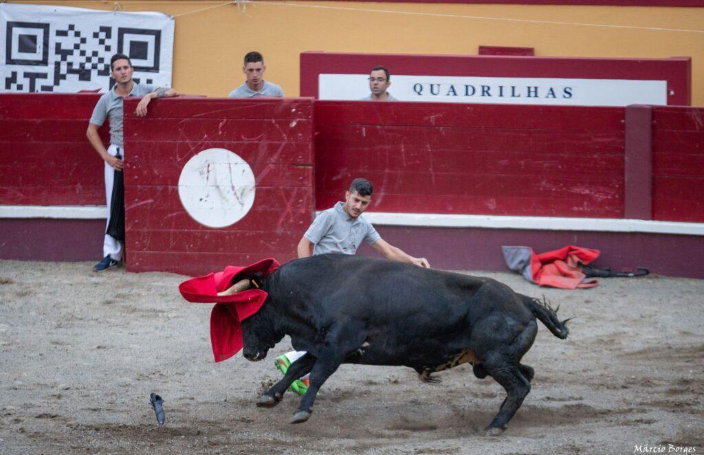 capinha, capinhas, bull, byk, byki, touro, touros, tourada, tourada, festival de capinhas, festiwal, festiwal capinhas, festival, arena,