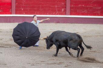 Capinha, tourada i byki, czyli terceirska tradycja od kuchni