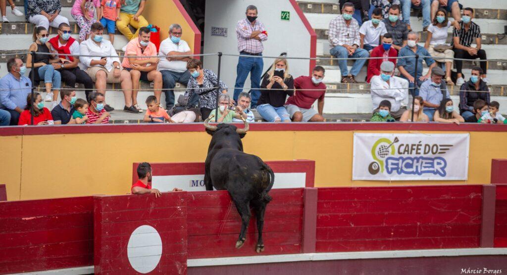 capinha, capinhas, bull, byk, byki, touro, touros, tourada, tourada, festival de capinhas, festiwal, festiwal capinhas, festival, arena