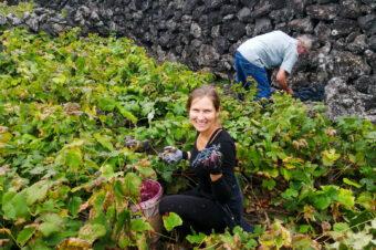 Winobranie, winnice i wino, czyli odkrywam raj w Biscoitos